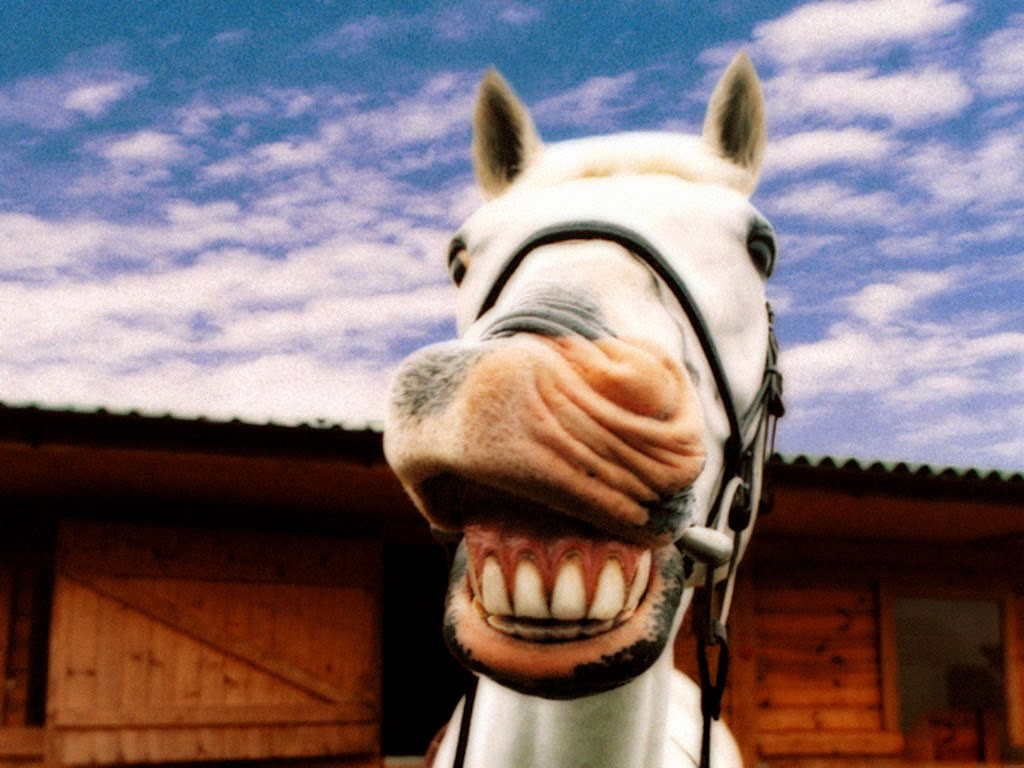 Картинка улыбка лошади смешные, картинки красивые