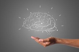 Ученые обнаружили различия между мужским и женским мозгом
